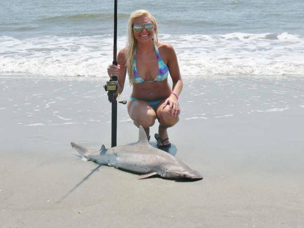 A View From The Beach Virginia Downplays Shark Menace
