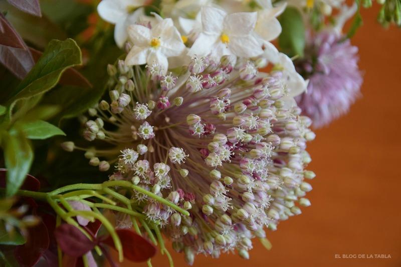 Allium ampeloprasum, Rhipsalis baccifera, Solanum jasminoides