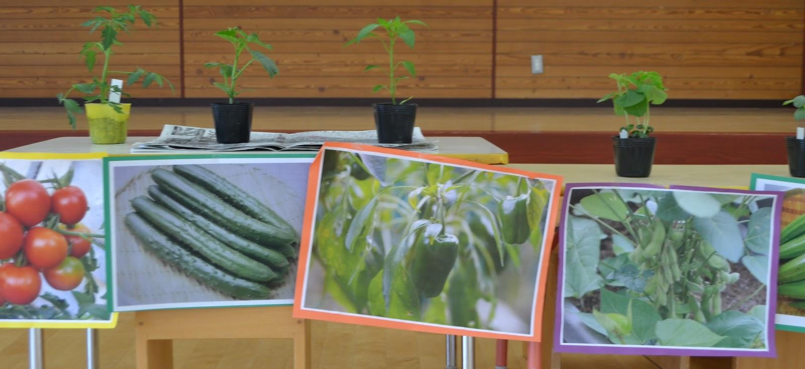 福岡幼稚園News: 2015年5月 花の苗・野菜の苗を植えました!!