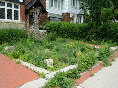 Midtown Toronto Summer Front Garden Cleanup Before by Paul Jung Gardening Services Inc.--a Toronto Gardening Company