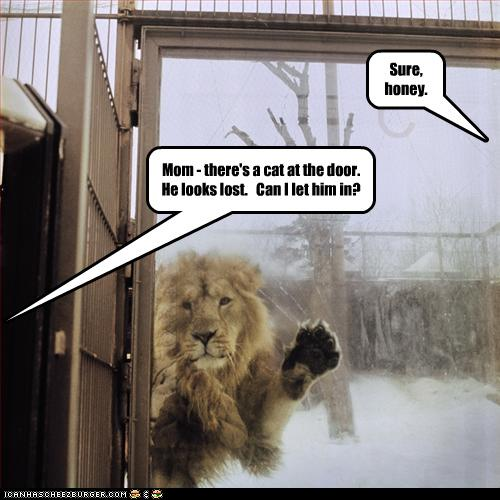Funny Image Collection: Funny Cat Pictures - Funny Pictures