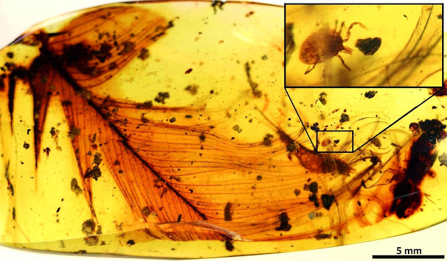 Dinosaur Parasites Found Filled With Blood and Trapped in Amber