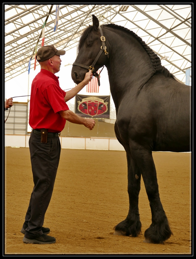 Award Winning Othello of Friesians of Majesty