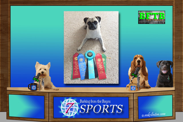 BFTB NETWoof Sports featuring Mabel the Pug ♥
