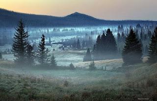Green Pear Diaries, fotografía, fotógrafo, Kilian Schönberger, paisajes, Bosque Bávaro