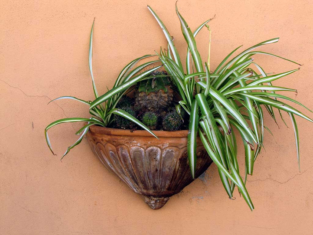 Wall planter, Livorno