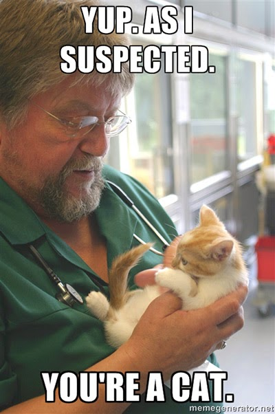 Vets check over all the cats in our care