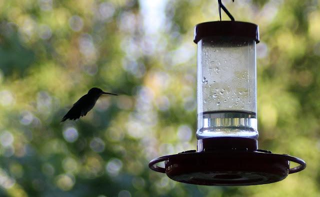 Sugar Water For Hummingbirds 82