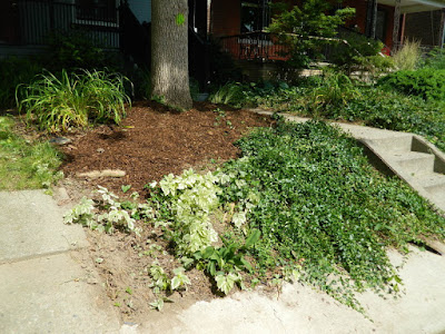 Palmerston Toronto Front Garden Cleanup after by Paul Jung Gardening Services