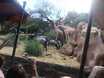 Jungle Cruise no Magic Kingdom em Orlando - Florida