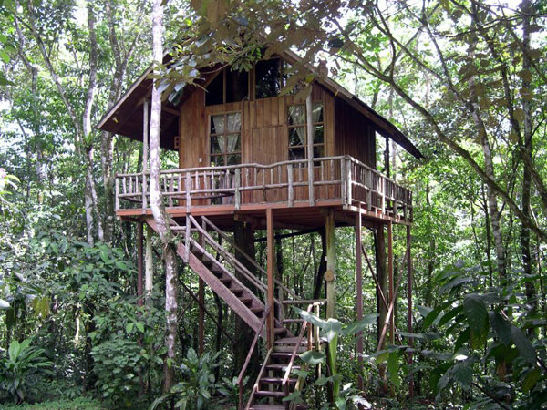 Adrienne S Corner Treehouses