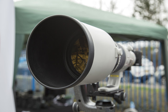 Image of the Canon 500mm f/ 4 IS II USM Lens