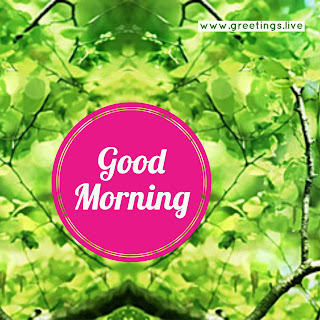 Fresh good morning greetings picture message.jpg