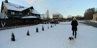Tallinnan näyttelyt 10.2. - 11.2.