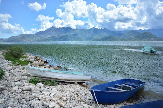 Что посмотреть в Черногории. Скадарское озеро где покушать