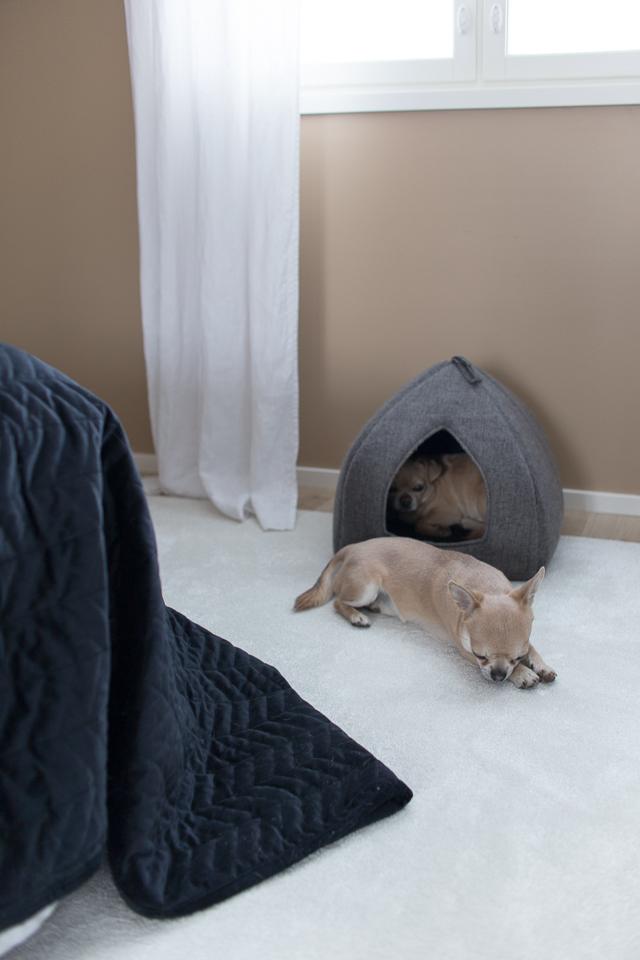 koirat, chihuahua, L ja M, makuuhuone, sisustus, hattaramatto VM Carpet