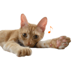 Adorable red tabby cat sticker
