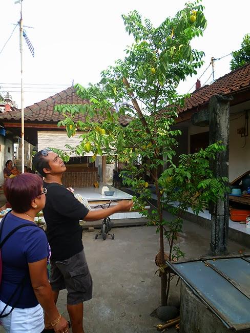 Árbol en la casa de Dewa