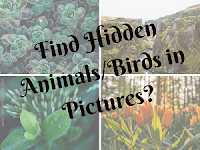 Hidden Animals/Birds Picture Puzzles for Kids with answers