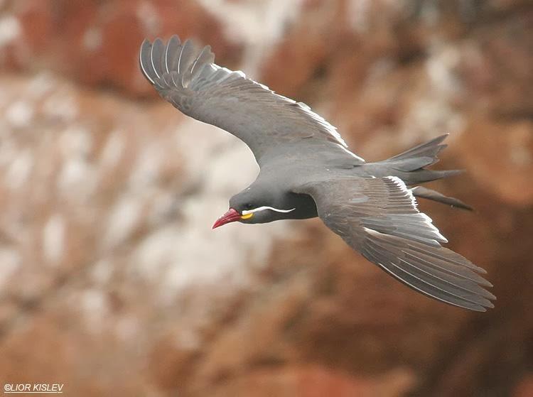 Inca tern