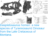 http://sciencythoughts.blogspot.co.uk/2017/03/daspletosaurus-horneri-new-species-of.html