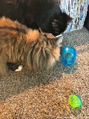 Maggie and Lucy the cats playing with a toy