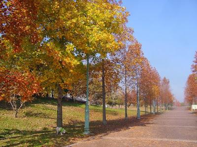 大阪府枚方市・山田池公園の紅葉 並木