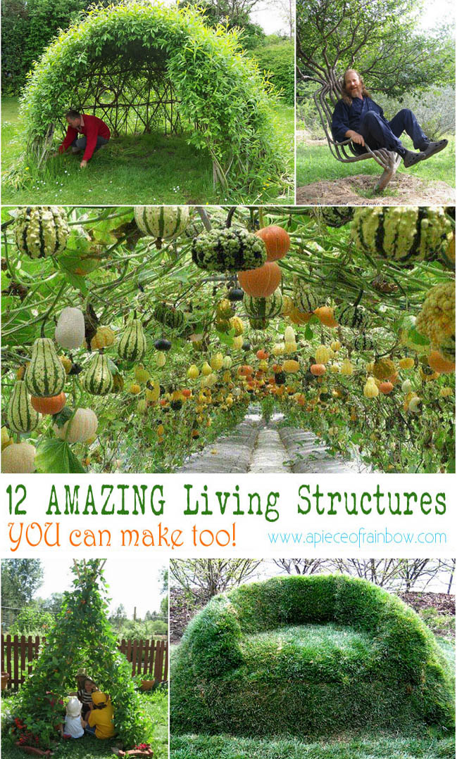 Living Willow Tunnel For Garden And Backyard