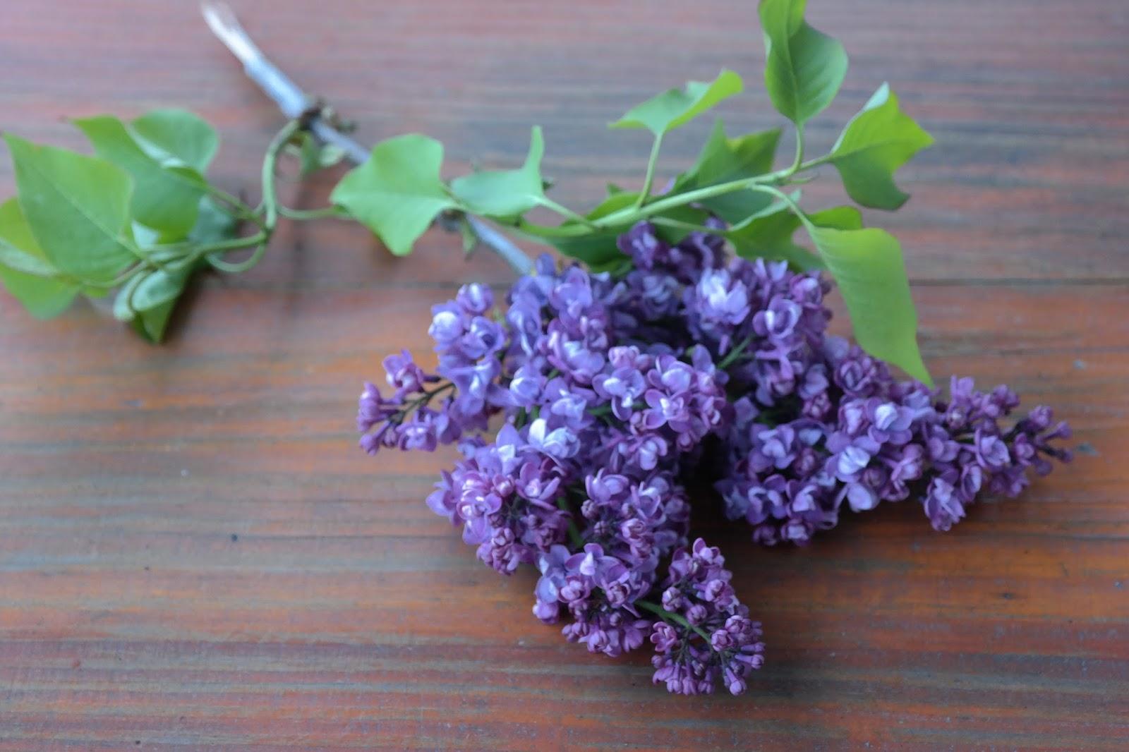 Lilak - właściwości i zastosowanie