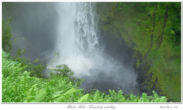 Akaka Falls: Everybody watching