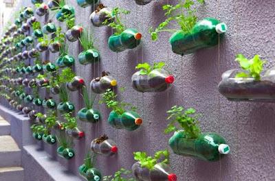 Botol plastik sebagai pot tanaman