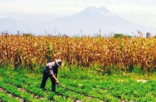 επιδότηση έως 90% για καλλιέργειες