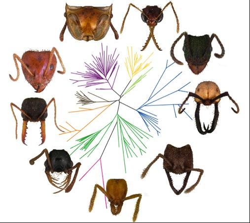 formigas-insetos