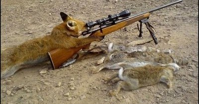 All Wallpapers Funny Cats With Guns Wallpapers