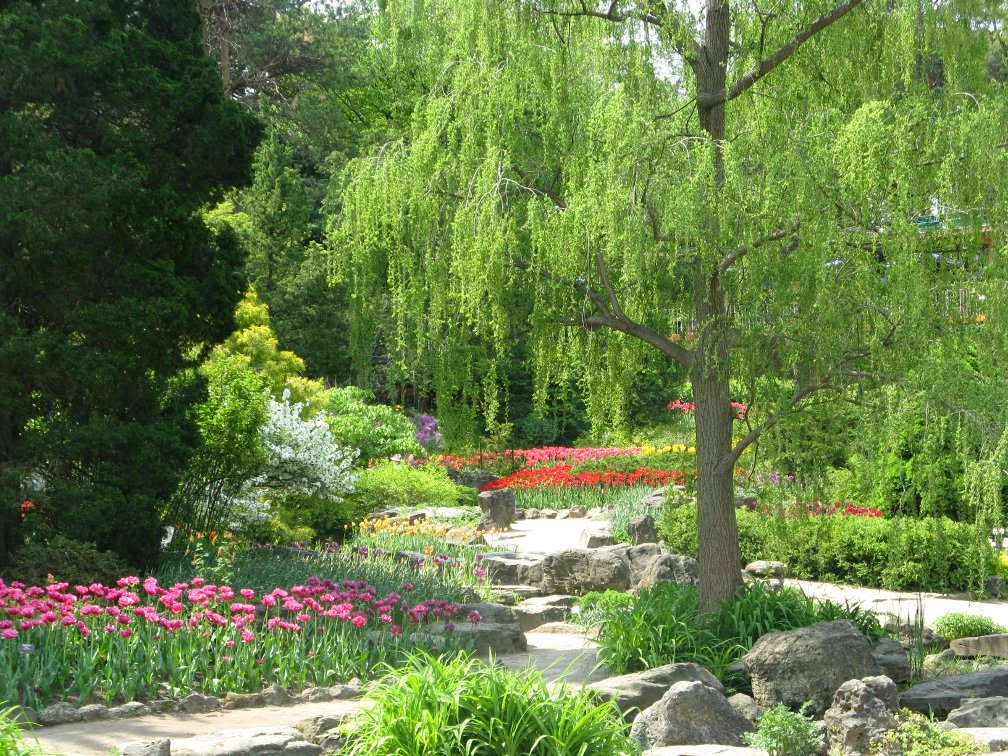 Royal Botanical Gardens tulips Rock garden by garden muses-not another Toronto gardening blog