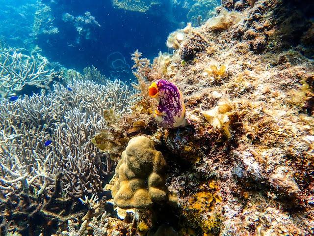 Island-hopping-Port-Barton-Paradise-reef-Philippines-snorkeling