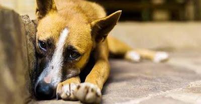 Espagne : lancement d'une application pour signaler la maltraitance animale Safe_image%2B%25281%2529