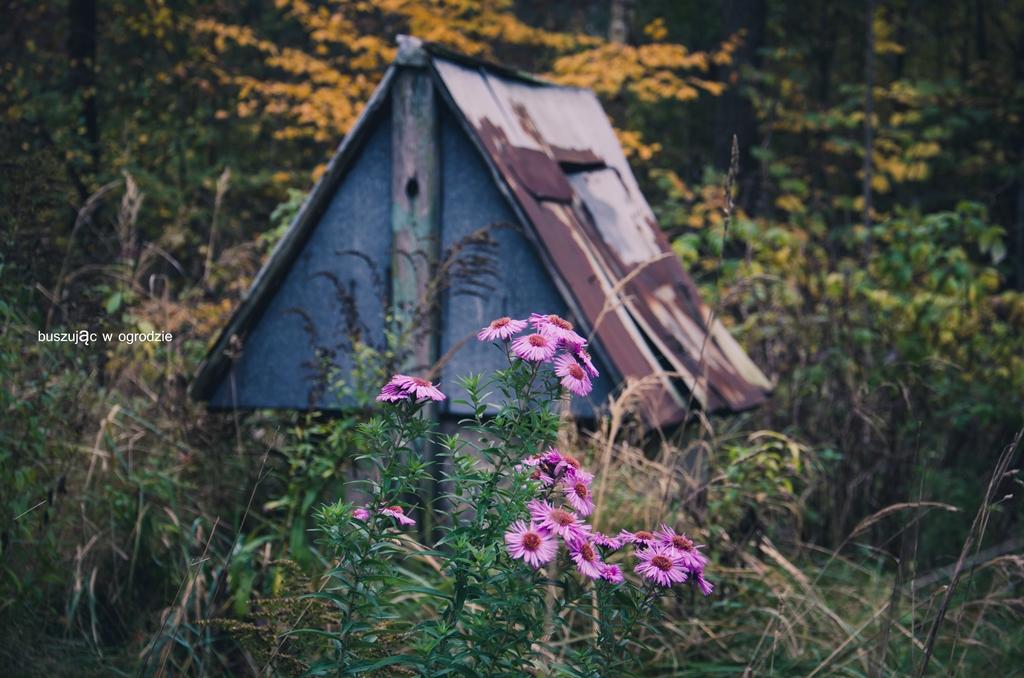jesienne klimaty, jesienny ogród