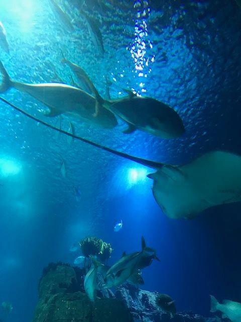 A Semana em Flashes sea the future oceanário armazém de ideias ilimitada