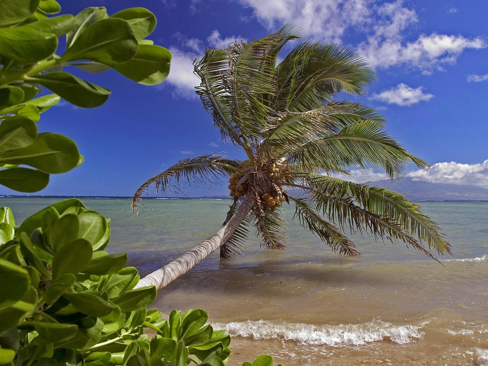 Molokai Island, Hawaii | Tourist Destinations