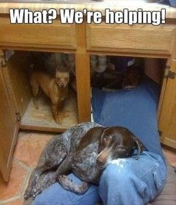 Funny Dog Humor: Just helping the old man..