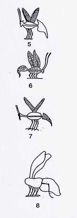 Imagenes de Egipto: representaciones de insectos en tumbas