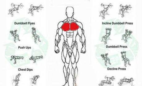 the 13 best chest exercises for men  daily body workout