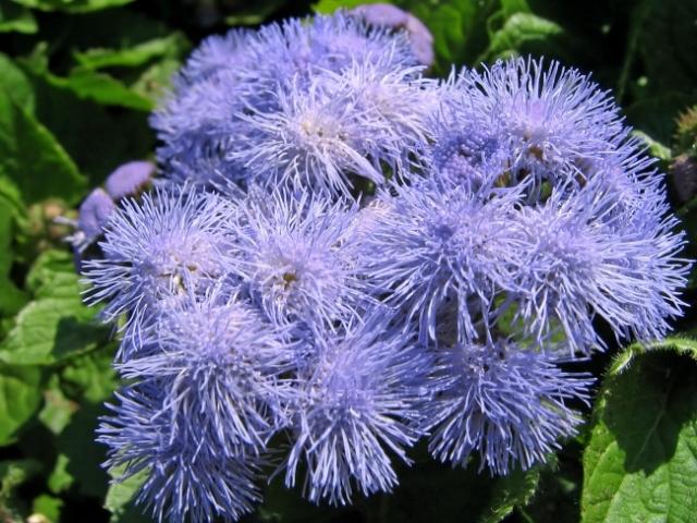 Fuzzy Purple Flower