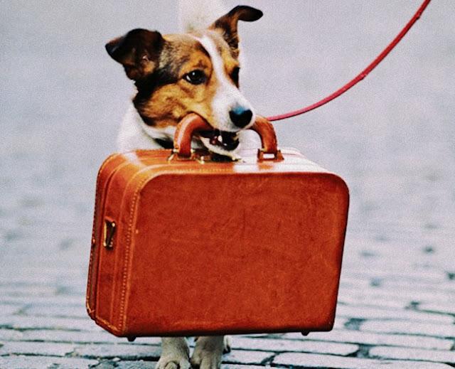 Viagem com os pets: como reduzir o estresse e facilitar a adaptação