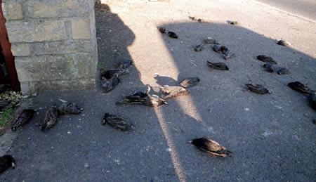 https://3.bp.blogspot.com/-QNpZD7HXBO4/WnL9Doz_37I/AAAAAAAAnp0/7gzGrFhISoYr5OD90qEPMutsMFSMhF8kACLcBGAs/s1600/a97047_9-Birds.jpg