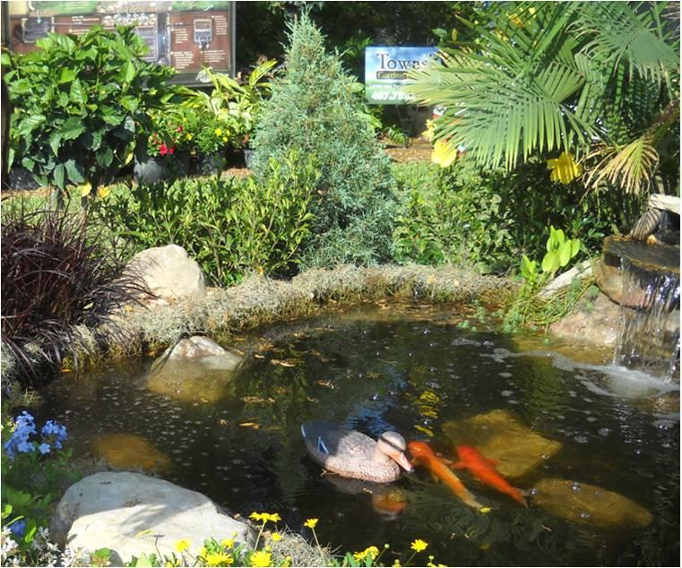 ideas para construir estanques de jardn y plantas flotantes arraigadas y palustres ideas to built a pond to your garden with floating plants