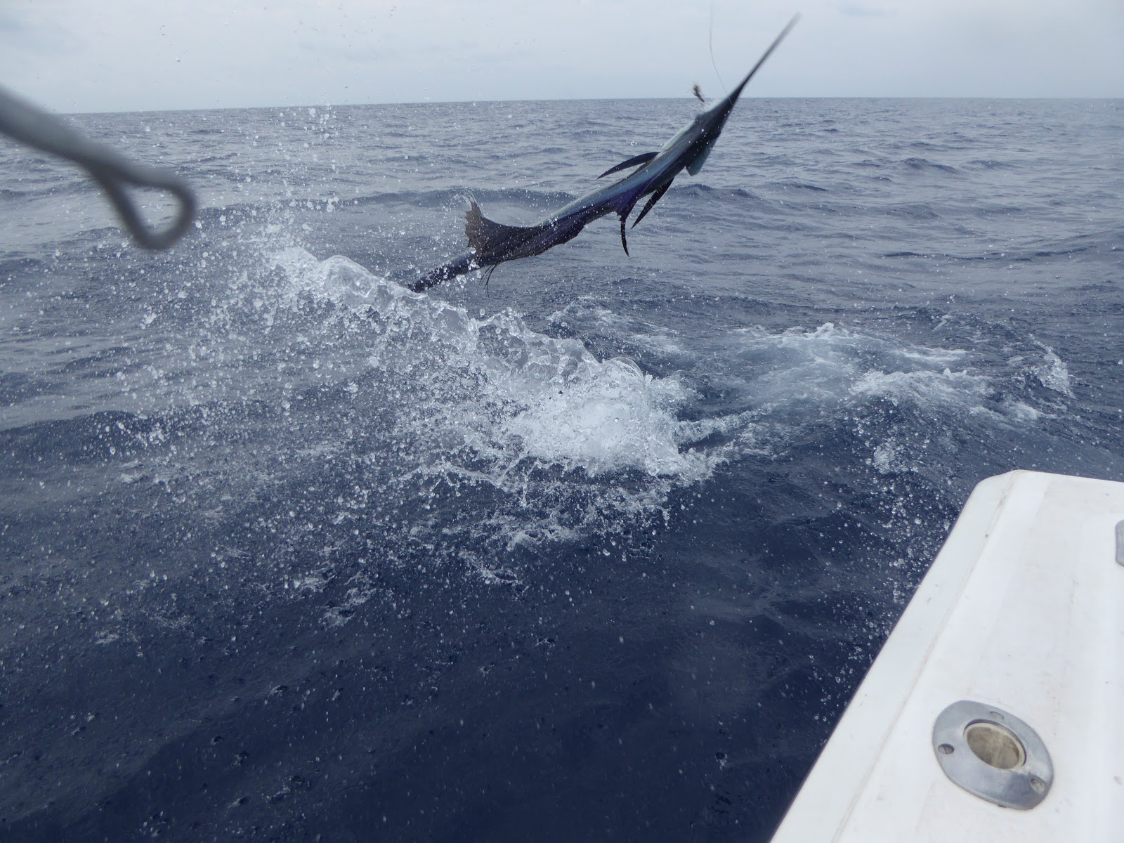 Mad marlin lodge blog sport fishing in guatemala for Best fishing in the world