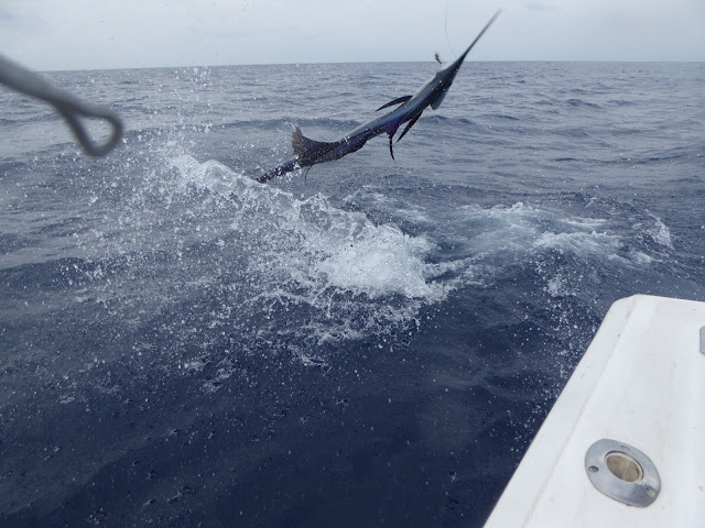 Fish with mad marlin sportfishing in both Huatulco Mexico and Guatemala for the best sport fishing trips and charters