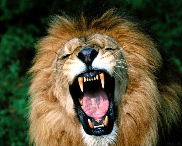 1 Reis 13 | O velho profeta de Judá